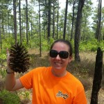 Huge pine cones abound