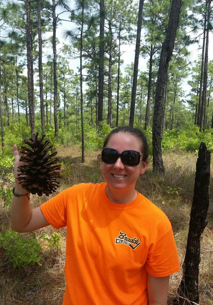 Huge pine cones abound
