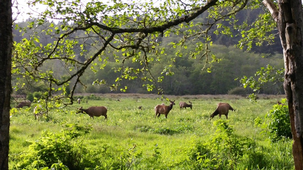 Redwood trees in Prairie Creek State Park part of Redwood National Park