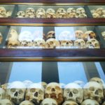 Several rows of bones.
